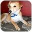Photo 3 - Labrador Retriever/Shepherd (Unknown Type) Mix Puppy for adoption in Latrobe, Pennsylvania - Gavin