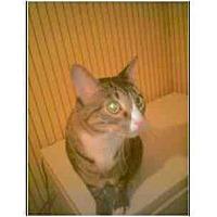 Adopt A Pet :: Daniel - Owasso, OK