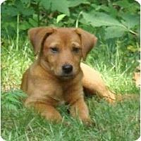 Adopt A Pet :: Quincy - Plainfield, CT