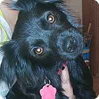 Adopt A Pet :: Rosie - Golden Valley, AZ