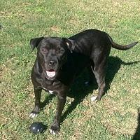 Adopt A Pet :: Hope - San Antonio, TX