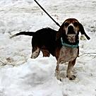 Adopt A Pet :: Izzy