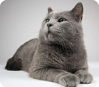 Domestic Shorthair Cat for adoption in Kingston, Ontario - Jake