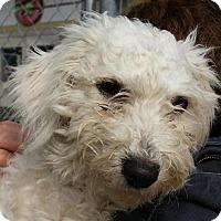 Adopt A Pet :: Winter - Canoga Park, CA
