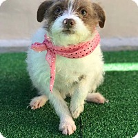 Adopt A Pet :: Rommy - San Diego, CA