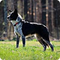 Adopt A Pet :: Skye - Normandy, TN