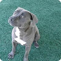 Adopt A Pet :: Polly - Chula Vista, CA