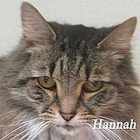 Adopt A Pet :: Hannah - Warren, PA
