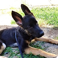 Adopt A Pet :: Karma: Goofy puppy! (NJ) - Spring City, TN