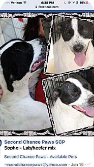 Mixed Breed (Medium) Mix Dog for adoption in Crowley, Louisiana - Sophia