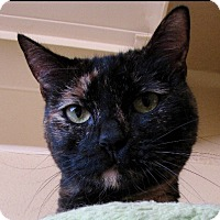 Adopt A Pet :: Trini - Chula Vista, CA