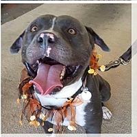 Adopt A Pet :: Jack - Arizona - Fulton, MO
