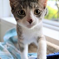 Adopt A Pet :: Lexus - Michigan City, IN
