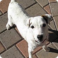 Adopt A Pet :: CRYSTAL - Scottsdale, AZ