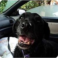 Adopt A Pet :: Wheeler - Fresno, CA