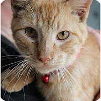 Adopt A Pet :: Maverick - Justin, TX