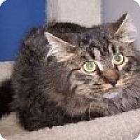 Adopt A Pet :: Calvin - Colorado Springs, CO