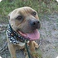 Adopt A Pet :: Hope - Alliance, NE