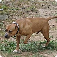 Adopt A Pet :: Nino - Conyers, GA