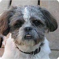 Adopt A Pet :: Gizmo - Rigaud, QC