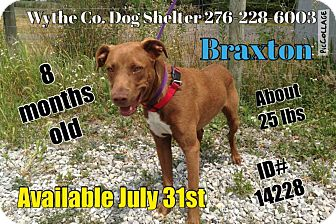 Labrador Retriever Mix Puppy for adoption in Wytheville, Virginia - Braxton - URGENT