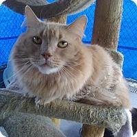 Adopt A Pet :: Sir Cinn A. Bunns - Delmont, PA