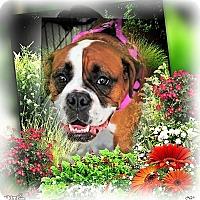 Adopt A Pet :: Zoe - Crowley, LA