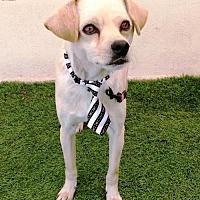 Adopt A Pet :: Louie - San Diego, CA