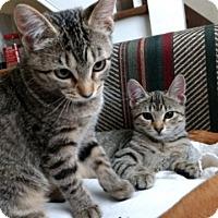Adopt A Pet :: Ashley - Sedalia, MO