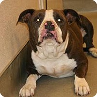 Adopt A Pet :: Meatball - Wildomar, CA