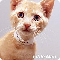 Adopt A Pet :: Little Man - Lincoln, NE