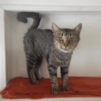 Adopt A Pet :: 9794 Mya - Erie, PA