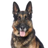 Adopt A Pet :: Coronado - Los Angeles, CA