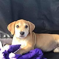 Adopt A Pet :: Ellen - Marlton, NJ