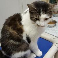 Adopt A Pet :: Leigh - Erie, PA