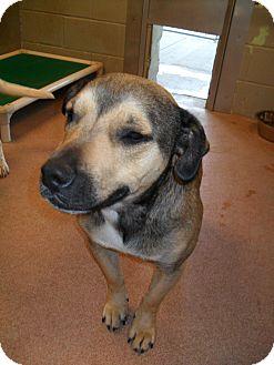 Shepherd (Unknown Type) Mix Dog for adoption in Jerome, Idaho - Macy