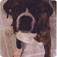 Adopt A Pet :: Clutch - Flint (Serving North and East TX), TX