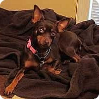 Adopt A Pet :: Jemma - Nashville, TN