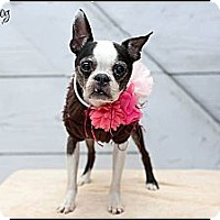 Adopt A Pet :: Sassy - Hilliard, OH