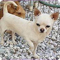 Adopt A Pet :: Chalupa - Escondido, CA