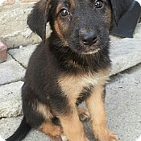Adopt A Pet :: Arthur**ADOPTED!** - Chicago, IL