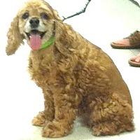 Adopt A Pet :: Penny June - Sugarland, TX