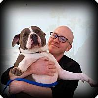 Adopt A Pet :: MARY - Ojai, CA