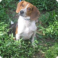 Adopt A Pet :: Buckshot