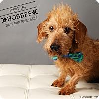 Adopt A Pet :: Hobbes - Omaha, NE