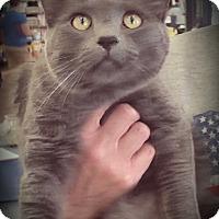 Adopt A Pet :: Leonard - Fairborn, OH