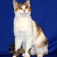 Adopt A Pet :: Lady DragonFly - Tracy, CA