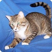 Adopt A Pet :: Bentley - Colorado Springs, CO