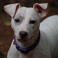 Terrier (Unknown Type, Medium) Mix Puppy for adoption in Lawrenceville, Georgia - Gracie