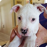 Adopt A Pet :: Tyche - Millersville, MD